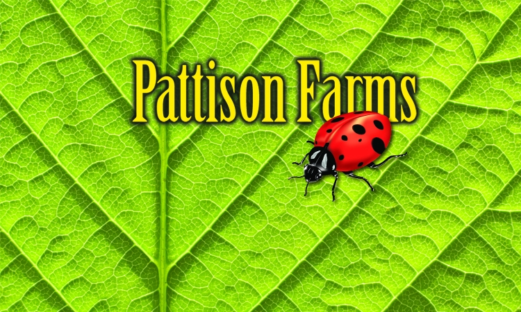 Pattison Farms
